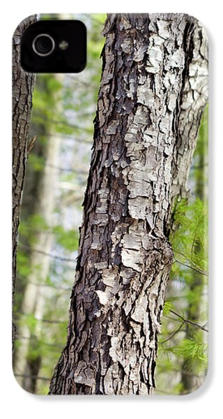 IPhone 4 Case featuring the photograph Forest Trees by Christina Rollo