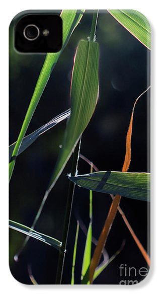 IPhone 4 Case featuring the photograph Fragment by Linda Lees