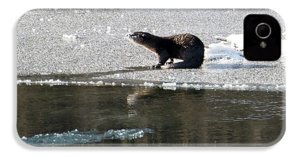 Frosty River Otter  IPhone 4 Case by Mike Dawson