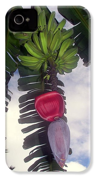 Fruitful Beauty IPhone 4 / 4s Case by Karen Wiles