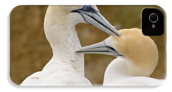 IPhone 4 Case featuring the photograph Gannet Pair 1 by Werner Padarin