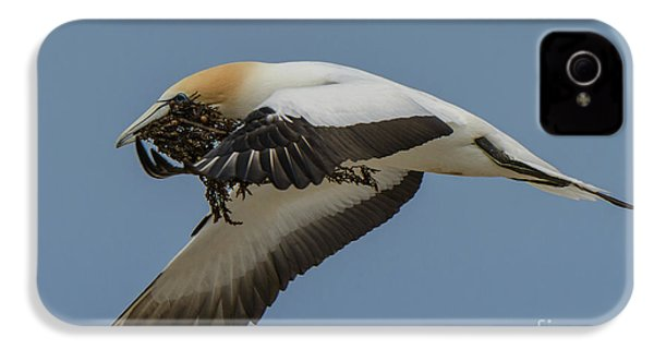 IPhone 4 Case featuring the photograph Gannets 1 by Werner Padarin