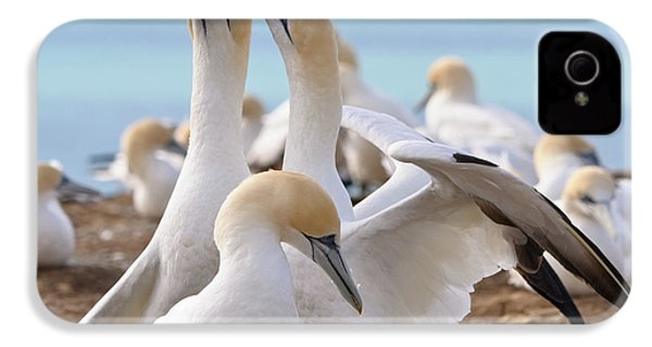 IPhone 4 Case featuring the photograph Gannets by Werner Padarin