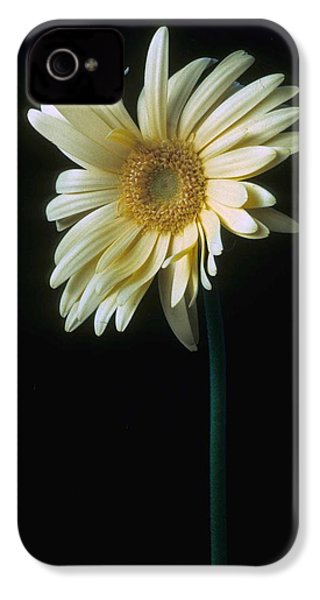 Gerber Daisy IPhone 4 Case by Laurie Paci