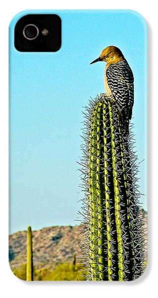 Gila Woodpecker On Saguaro In Organ Pipe Cactus National Monument-arizona IPhone 4 / 4s Case by Ruth Hager