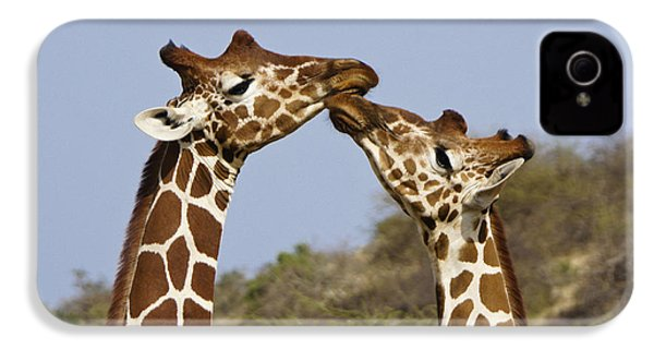 Giraffe Kisses IPhone 4 Case by Michele Burgess