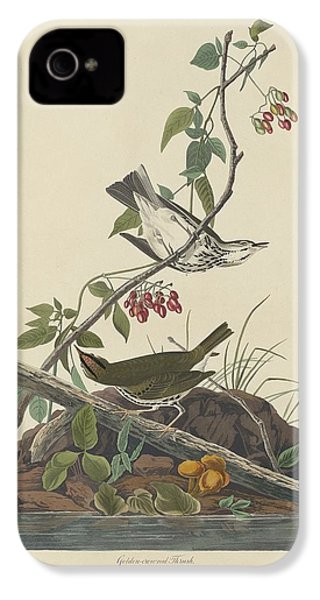 Golden-crowned Thrush IPhone 4 Case by Rob Dreyer