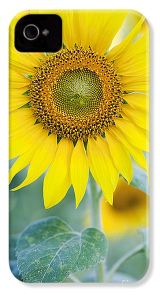 Golden Sunflower IPhone 4 Case by Tim Gainey