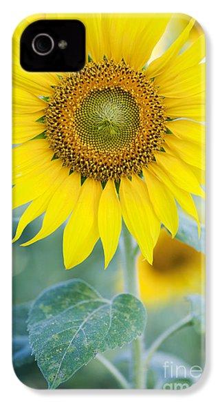 Golden Sunflower IPhone 4 / 4s Case by Tim Gainey
