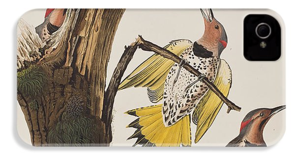 Golden-winged Woodpecker IPhone 4 Case by John James Audubon