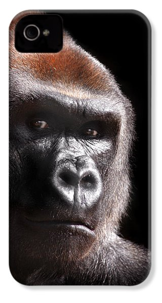 Gorilla ... Kouillou IPhone 4 / 4s Case by Stephie Butler
