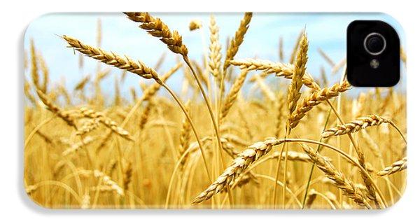Grain Field IPhone 4 / 4s Case by Elena Elisseeva