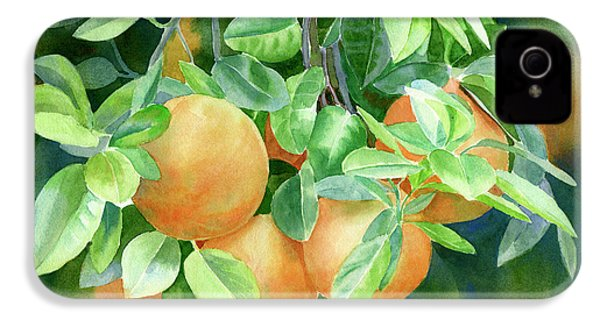 Grapefruit With Background IPhone 4 Case by Sharon Freeman