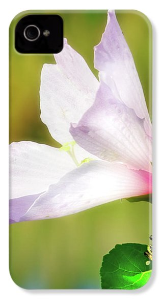 Grasshopper And Flower IPhone 4 Case
