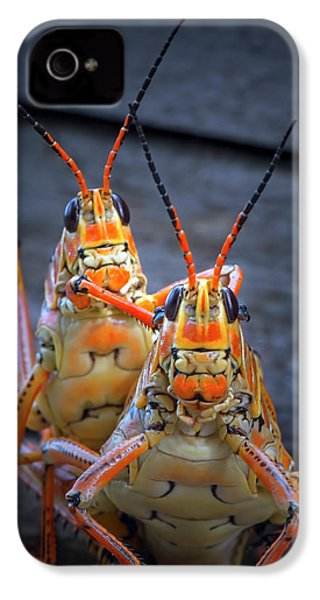 Grasshoppers In Love IPhone 4 Case