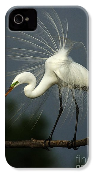 Majestic Great White Egret High Island Texas IPhone 4 Case by Bob Christopher