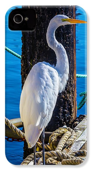 Great White Heron IPhone 4 Case