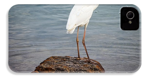 Great White Heron With Fish IPhone 4 Case by Elena Elisseeva