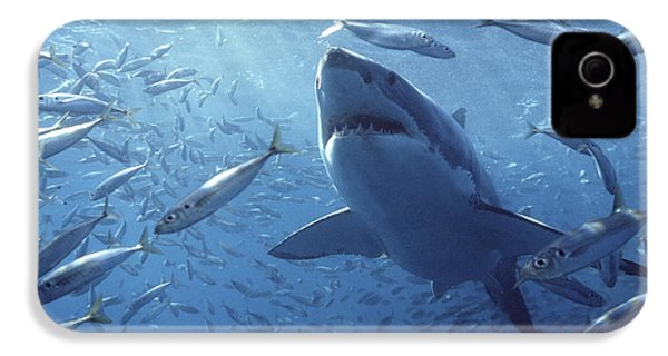 Great White Shark Carcharodon IPhone 4 Case