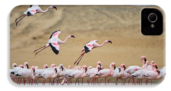 Greater Flamingos Phoenicopterus IPhone 4 Case by Panoramic Images
