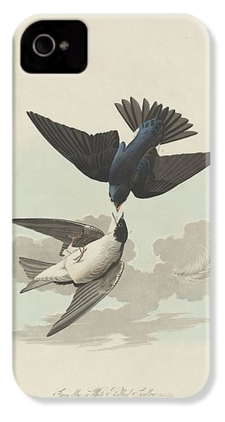 Green-blue Or White-bellied Swallow IPhone 4 Case by Rob Dreyer