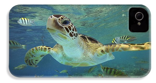 Green Sea Turtle Chelonia Mydas IPhone 4 Case by Tim Fitzharris