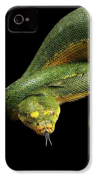 Green Tree Python. Morelia Viridis. Isolated Black Background IPhone 4 / 4s Case by Sergey Taran