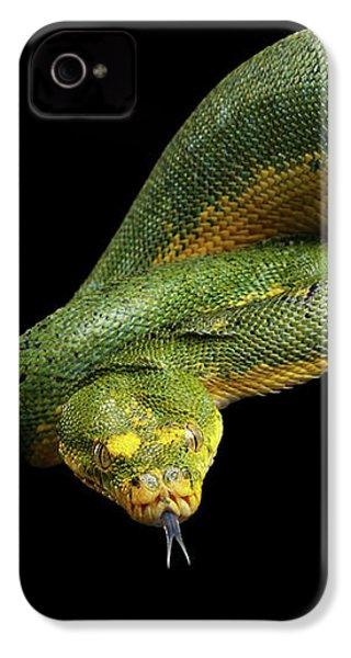 Green Tree Python. Morelia Viridis. Isolated Black Background IPhone 4 Case by Sergey Taran