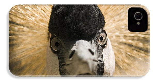 Grey Crowned Crane IPhone 4 / 4s Case by Chad Davis
