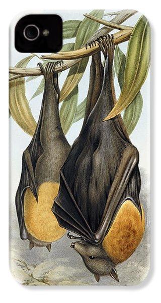 Grey Headed Flying Fox, Pteropus Poliocephalus IPhone 4 Case by John Gould