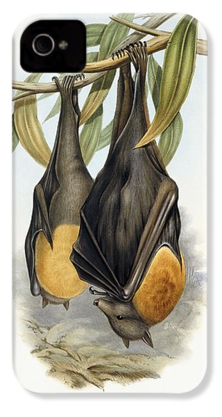 Grey Headed Flying Fox, Pteropus Poliocephalus IPhone 4 Case by John Gould