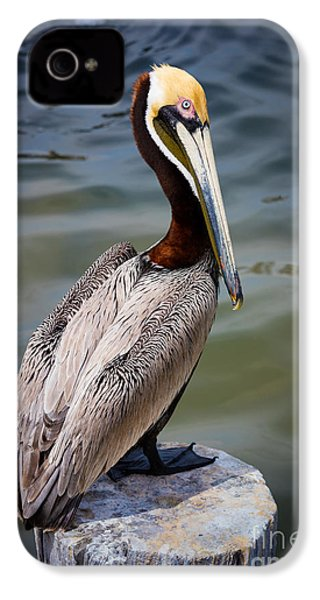 Grey Pelican IPhone 4 Case by Inge Johnsson