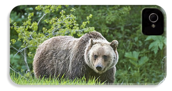 IPhone 4 Case featuring the photograph Grizzly Bear by Gary Lengyel