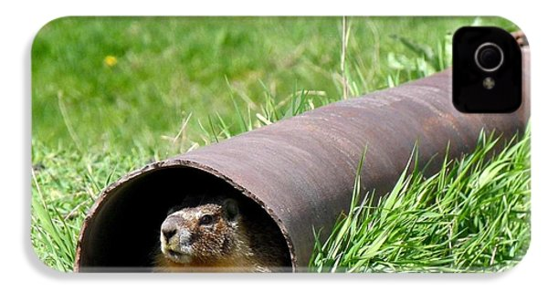 Groundhog In A Pipe IPhone 4 Case by Will Borden