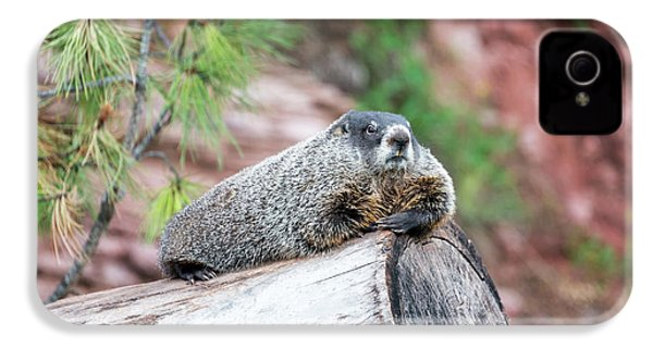 Groundhog On A Log IPhone 4 Case by Jess Kraft