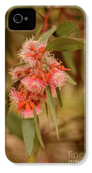 IPhone 4 Case featuring the photograph Gum Nuts 2 by Werner Padarin