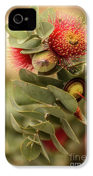 IPhone 4 Case featuring the photograph Gum Nuts by Werner Padarin