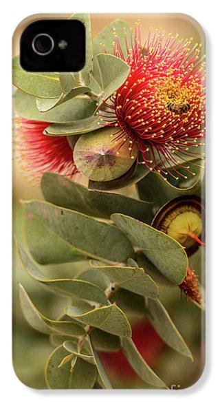 Gum Nuts IPhone 4 Case by Werner Padarin
