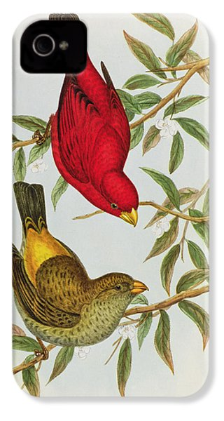 Haematospiza Sipahi IPhone 4 Case by John Gould