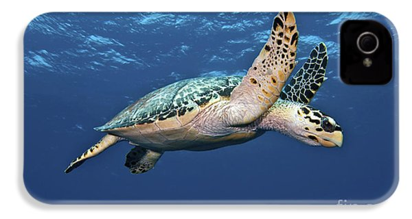 Hawksbill Sea Turtle In Mid-water IPhone 4 Case by Karen Doody