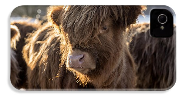 Highland Baby Coo IPhone 4 Case by Jeremy Lavender Photography