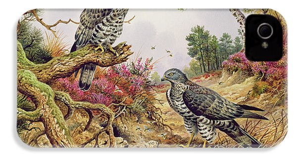 Honey Buzzards IPhone 4 Case by Carl Donner