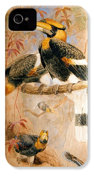 Hornbill  IPhone 4 Case