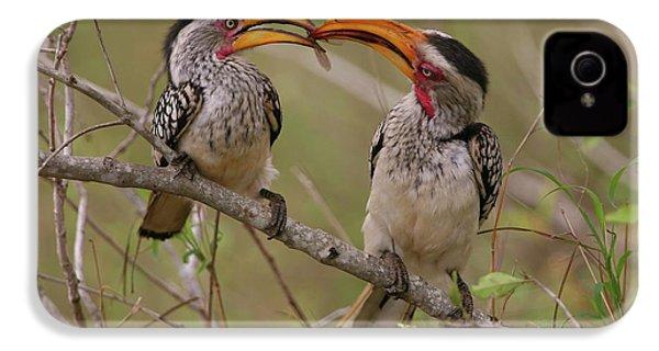Hornbill Love IPhone 4 Case by Bruce J Robinson
