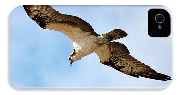Hunter Osprey IPhone 4 Case by Carol Groenen
