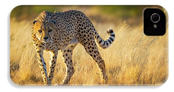 Hunting Cheetah IPhone 4 Case by Inge Johnsson