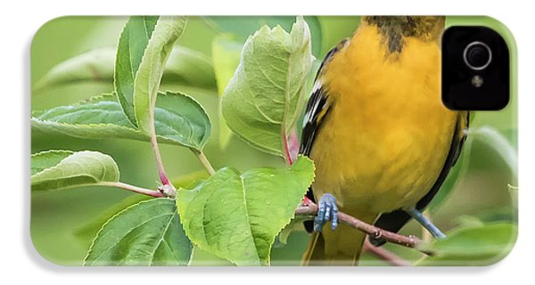 Immature Baltimore Oriole  IPhone 4 Case by Ricky L Jones