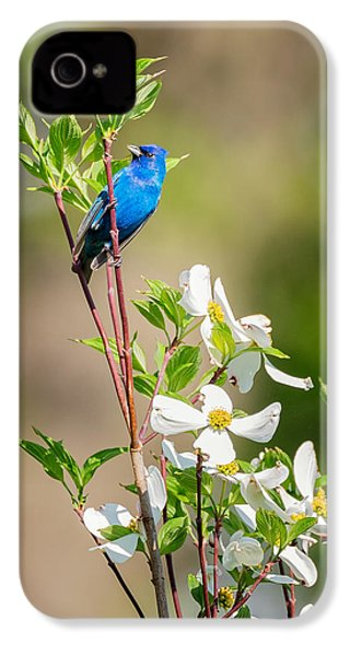 Indigo Bunting In Flowering Dogwood IPhone 4 Case by Bill Wakeley
