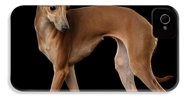Italian Greyhound Dog Standing  Isolated IPhone 4 Case by Sergey Taran