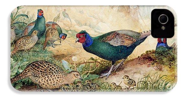 Japanese Pheasants IPhone 4 Case